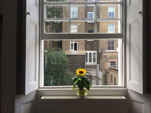 Sash Windows in Camden