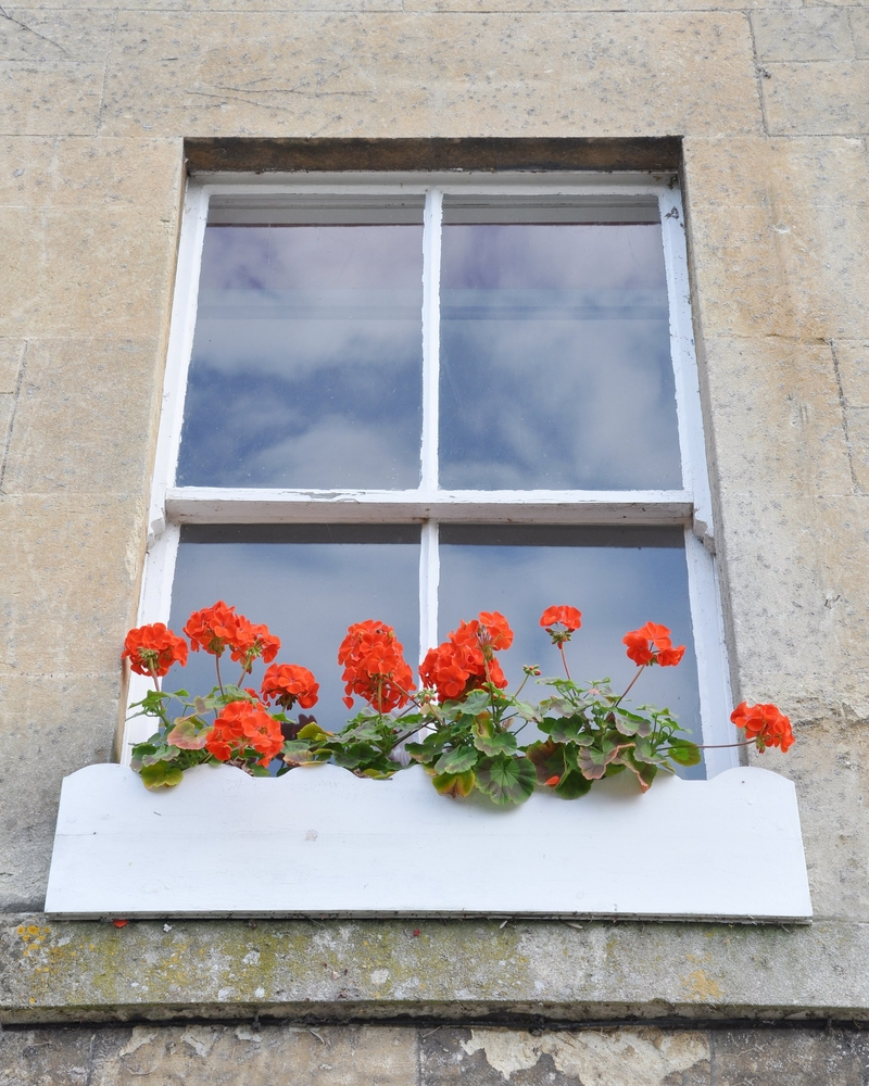red plants sash window